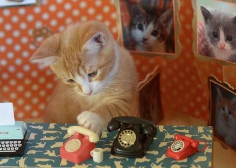【猫画像】今日は電話番!?
