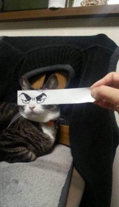 【猫画像】劇画タッチ!?