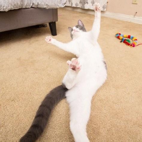 【猫画像】ダイナミックにこける!