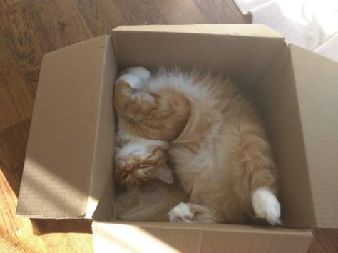 【猫画像】首の角度!!