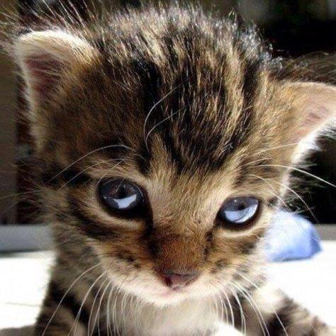 【猫画像】ドアップ!!