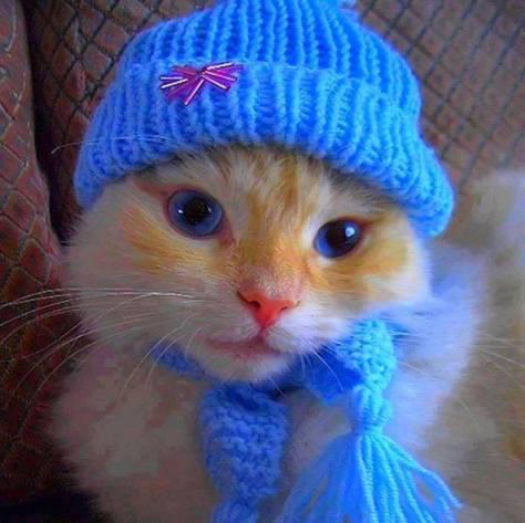 【猫画像】冬の装備