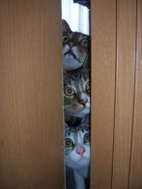【猫画像】気になる面々