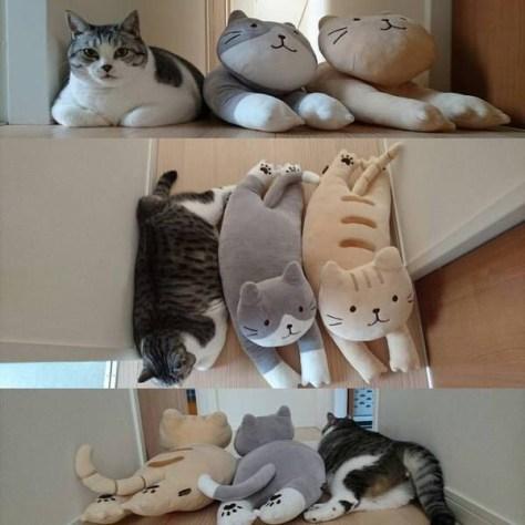 【猫画像】1つだけ違う!?