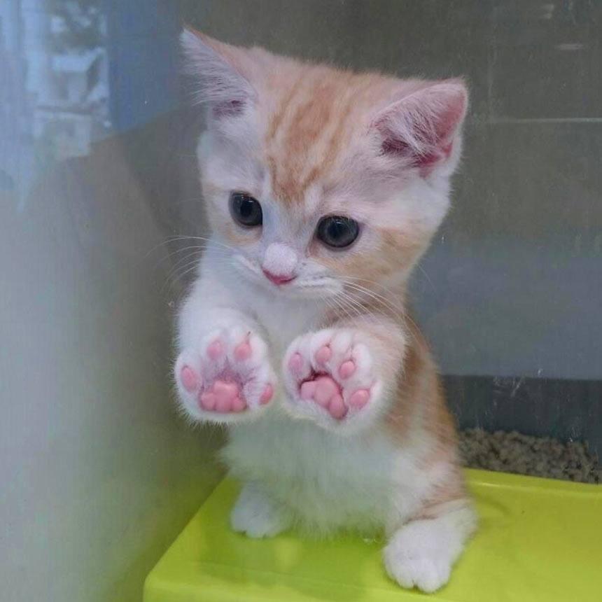 【猫画像】子猫の肉球