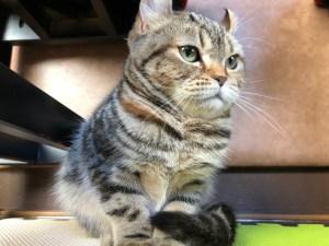 猫カフェねこのりいごちゃん