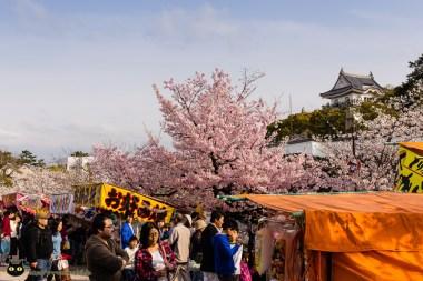 Sakura / Kishiwada Castle