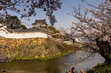 Burg Kishiwada Kirschblüte
