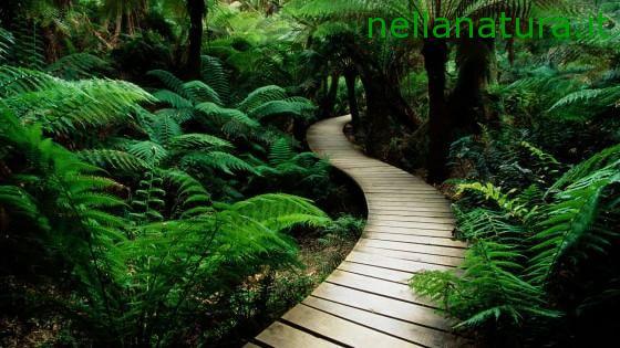 Rimugini troppo? Ti basta camminare in mezzo alla natura – Repubblica.it
