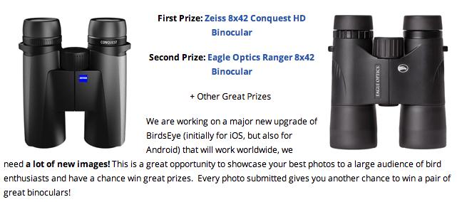 BirdsEye photo contest details