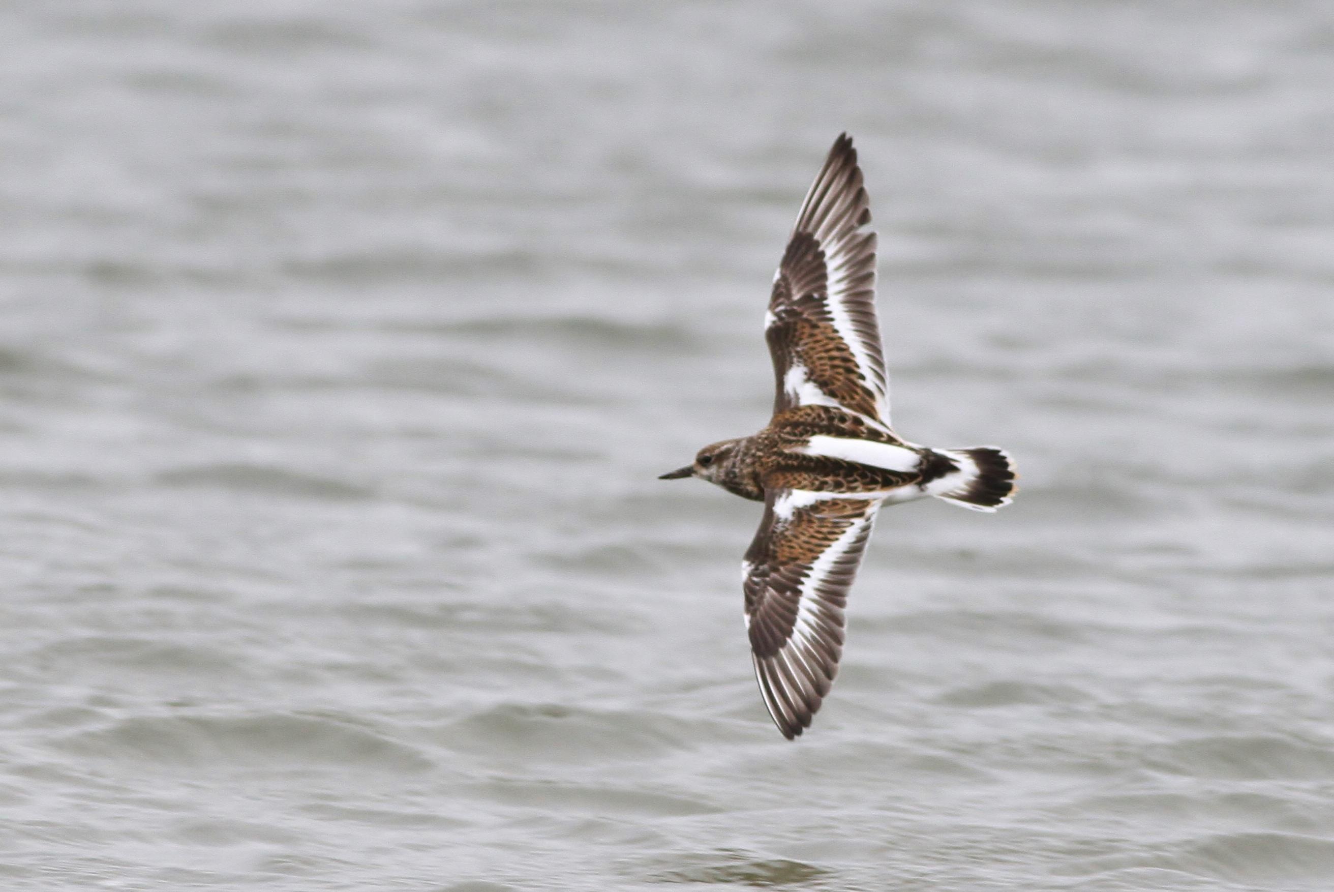 Coastal Delaware Birding Blitz