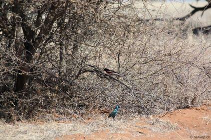 namibia-23