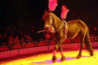Cirkus_Sultan_Berousek_obr_33
