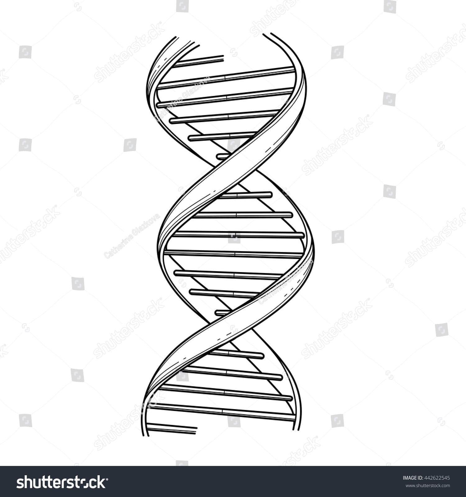 Common Worksheets Dna Replication Coloring Worksheet And