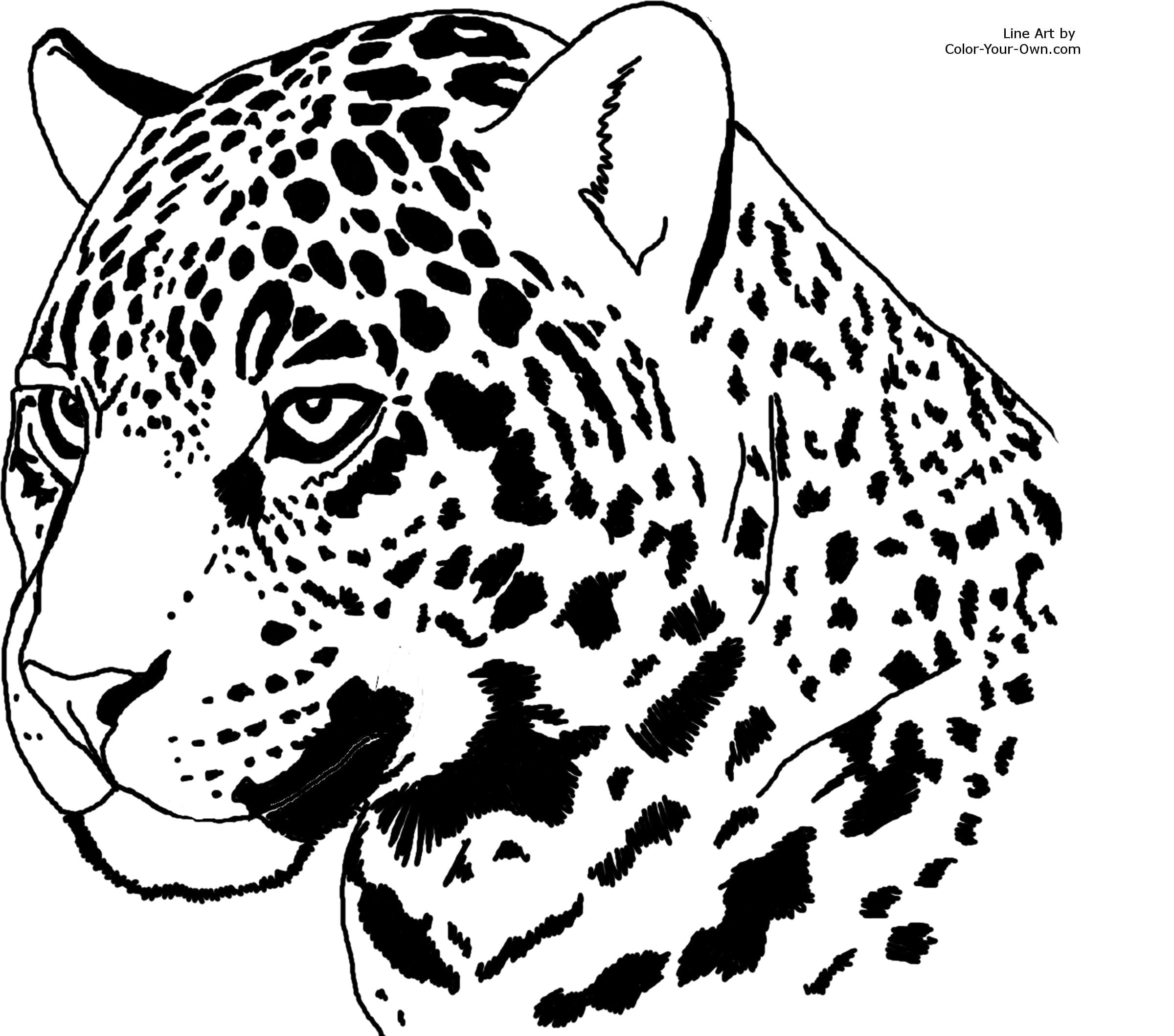 Jaguar Coloring Pages With Fantastic Go Printable In Neo