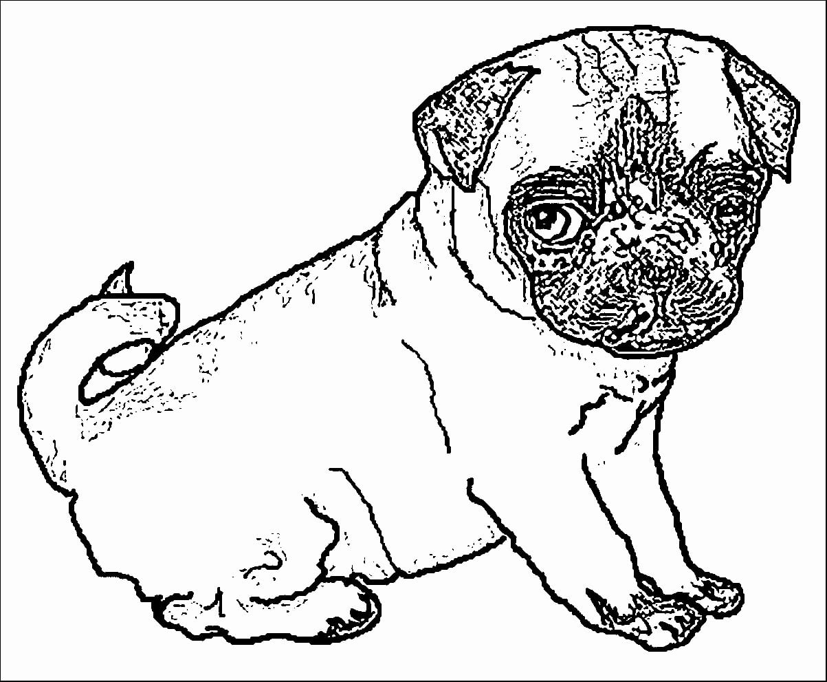 food drawings cute pug