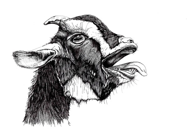 African Dwarf Goat Print NEO Coloring