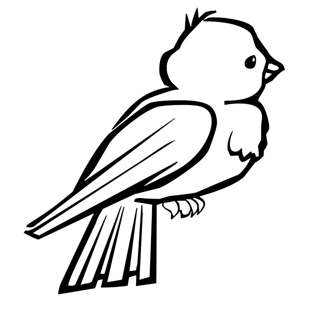Birds Coloring Pages Free Printable Birds Coloring Pages