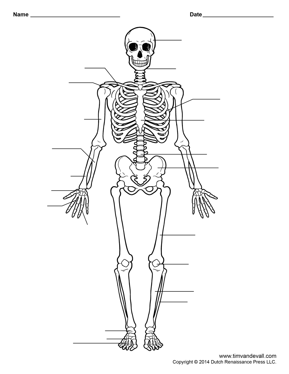 Skeleton Printable Worksheets