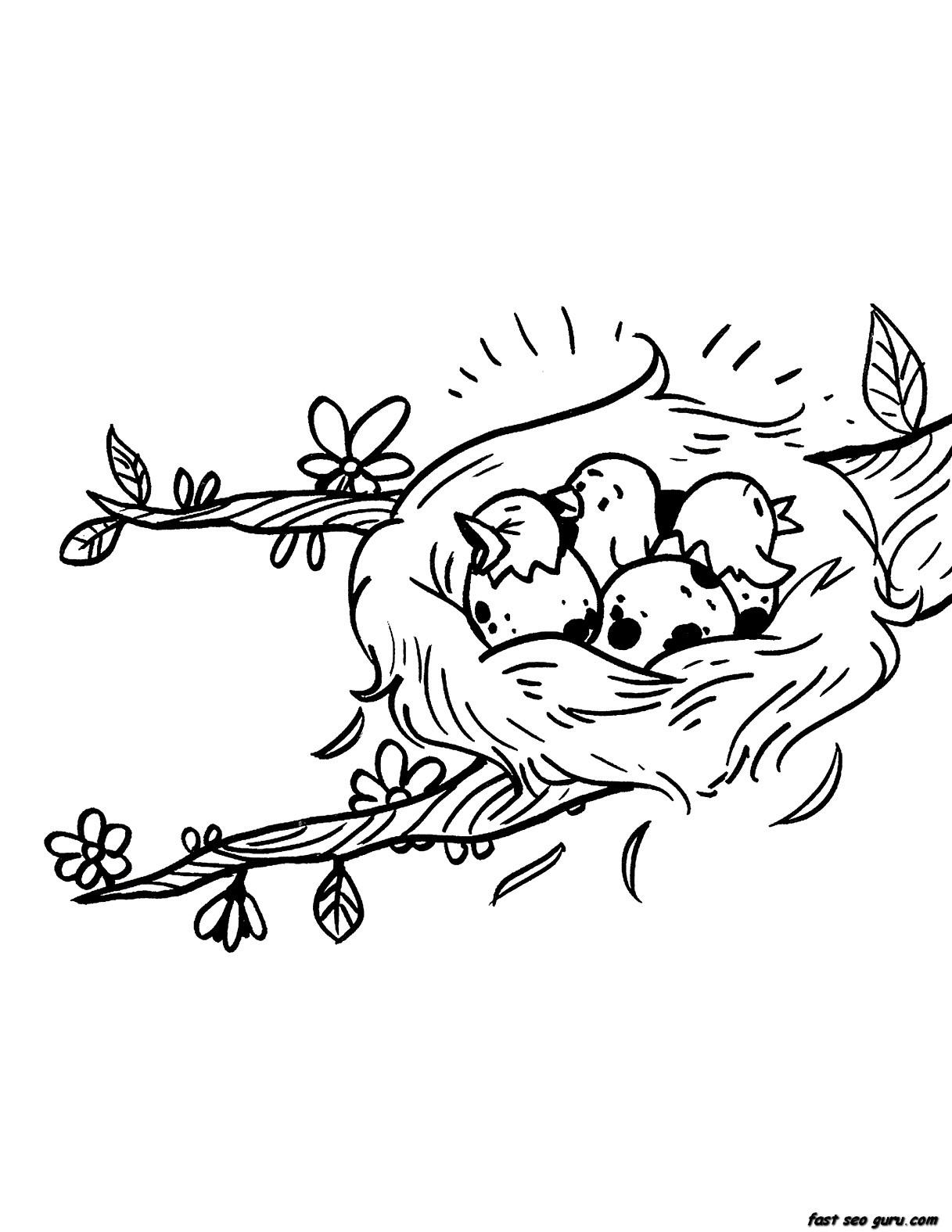 Printable Birds Eggs Hatching Nest Seasons Spring Coloring