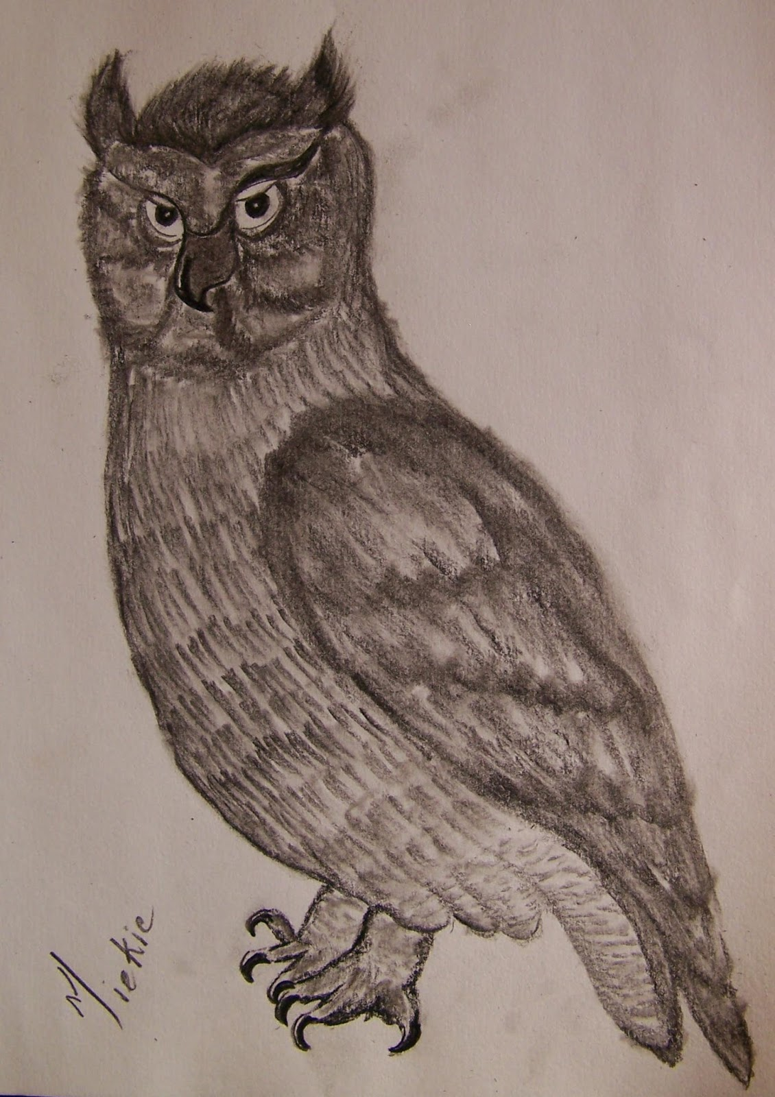 How To Draw Realistic Owls