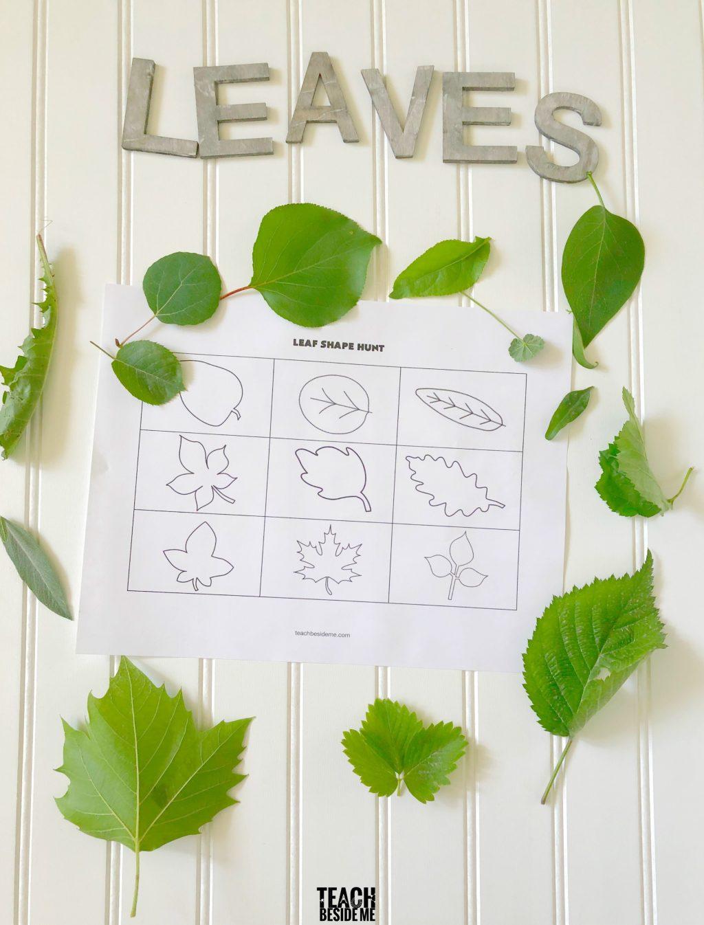 Leaf Shape Hunt A Teach Beside Me Neo Coloring