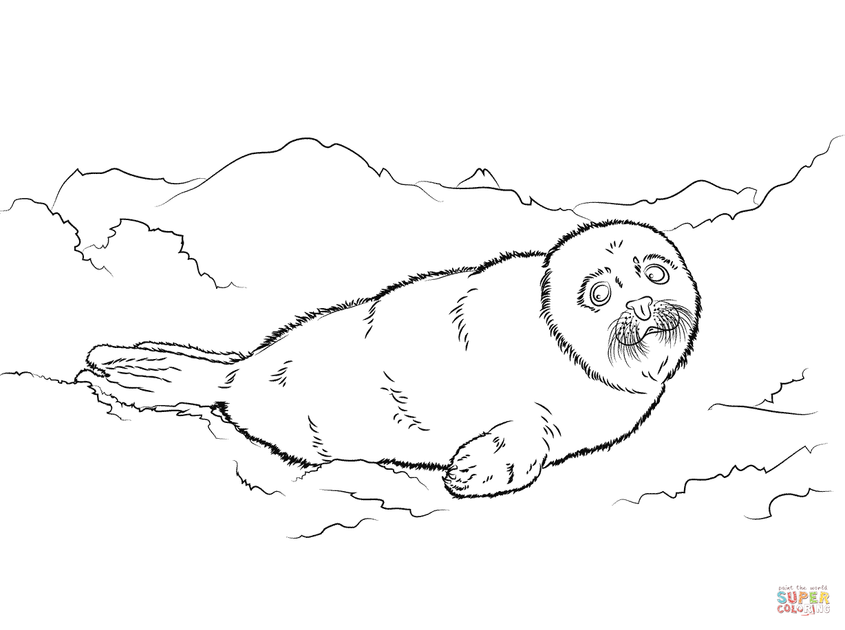 Cute Harp Seal Baby Coloring Page Neo Coloring