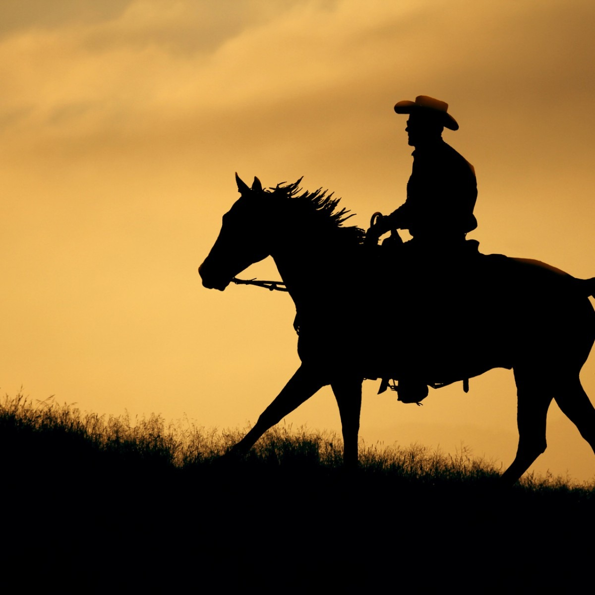 Silhouette Of A Cowboy And Horse At Sunset A Champion