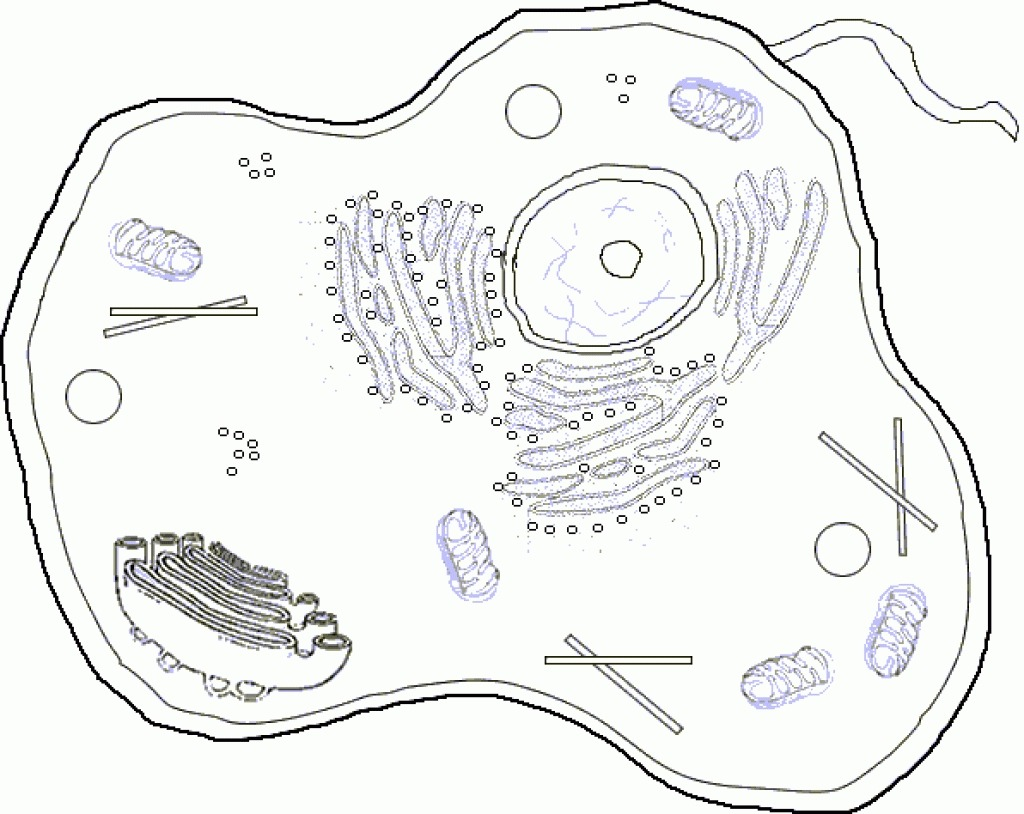 Cell Coloring Pages