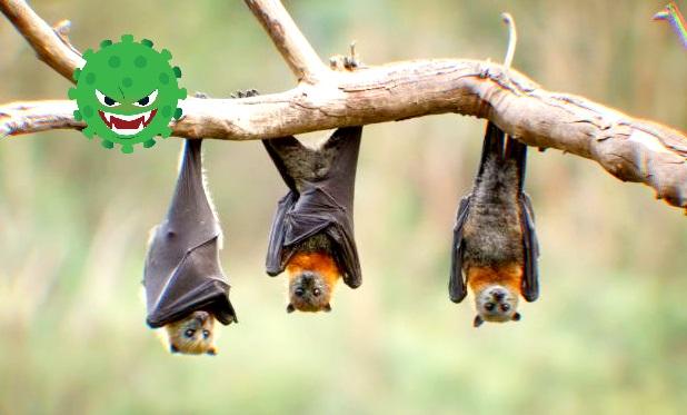 Científicos hallan cientos de nuevos coronavirus en los murciélagos de China