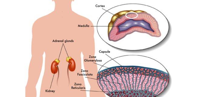 Treatment Adrenal Hipofonksiyon
