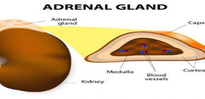 adrenal hipofonksiyon - Hipofonksiyon Adrenal diagnosis and treatment methods