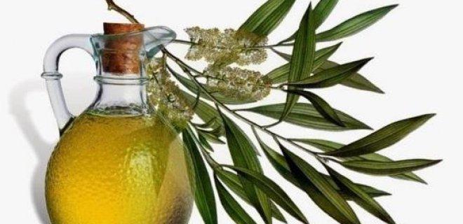 cay agaci yagi - The Benefits Of Tea Tree Oil