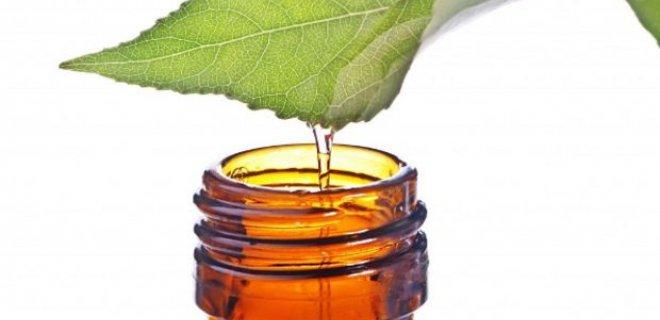 cay agaci yaginin ozellikleri - The Benefits Of Tea Tree Oil