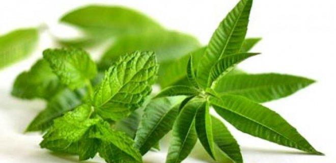Benefits of mint