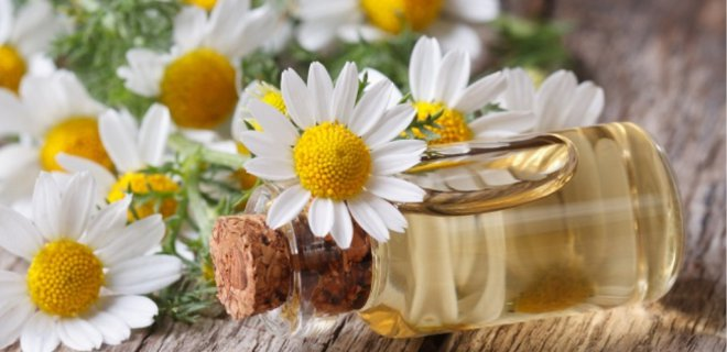 WHAT IS CHAMOMILE OIL ?