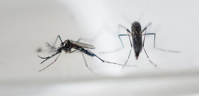 zika  - What is Zika virus and what are the symptoms?