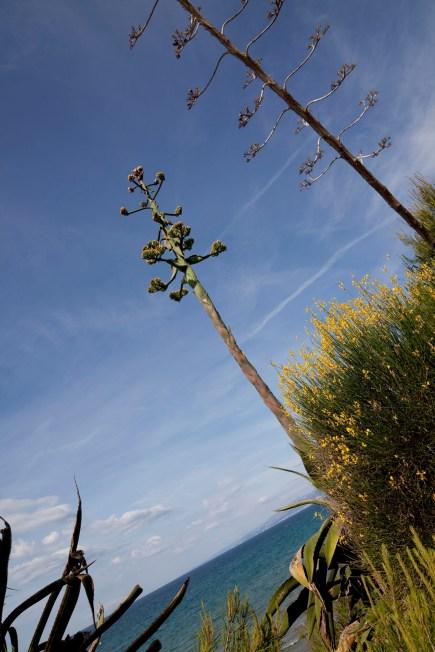 Cap de Salou - Strange Trees