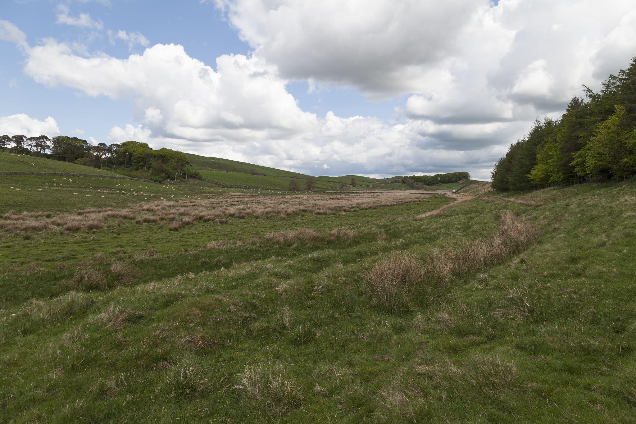 Housesteads Landscape