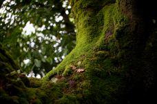 Portmeirion Woodland