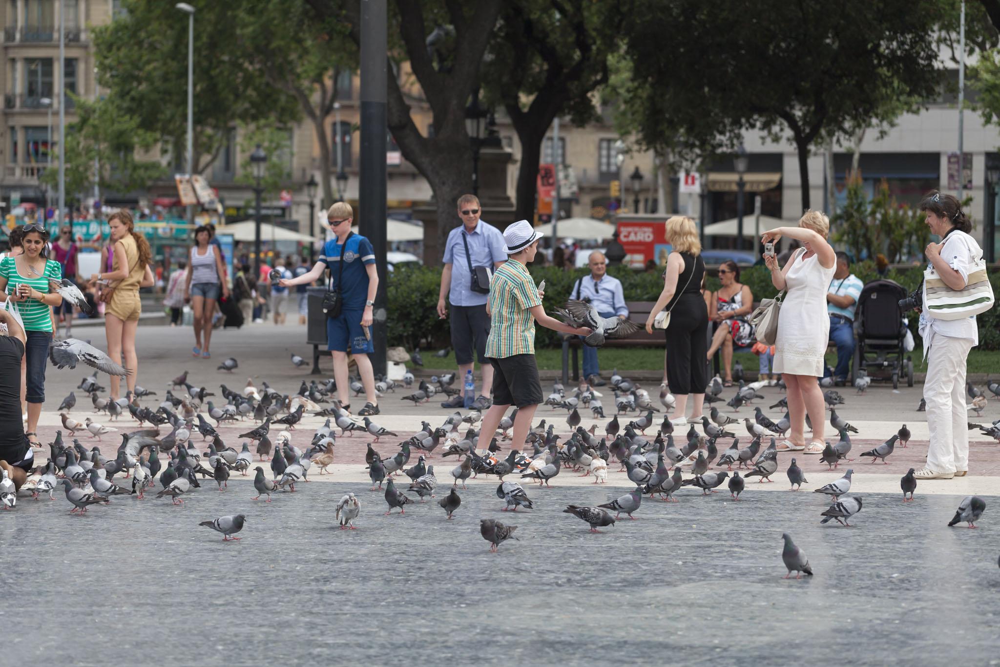 Among Pigeons
