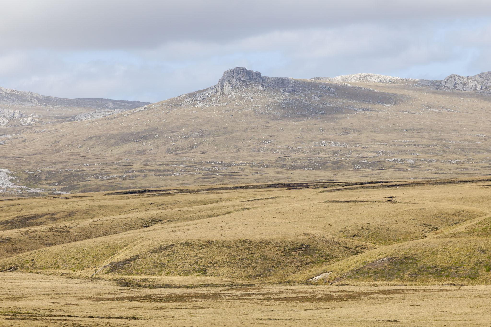 Estancia, Falkland Islands