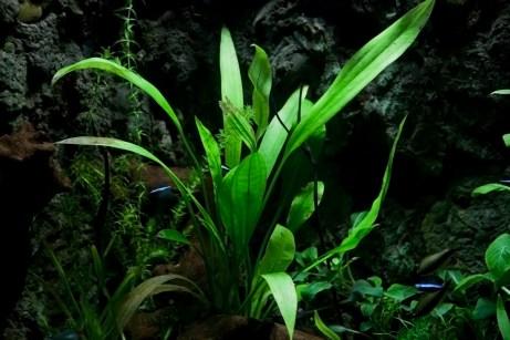 Green Plant, Blue Fish