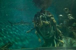 Medusa And Shark