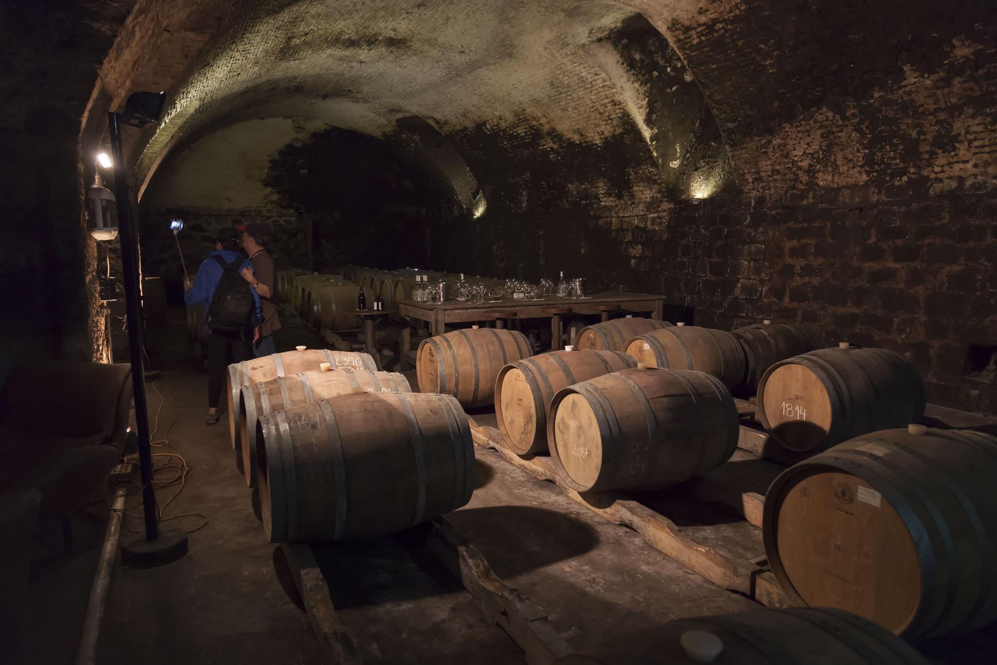 Juanico Vineyard Barrels