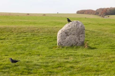 Stonehenge Crows