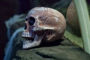 SeaQuarium Halloween Exhibit