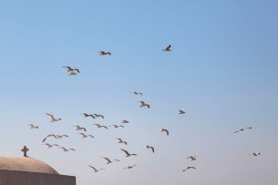 Birds Hovering On The Breeze