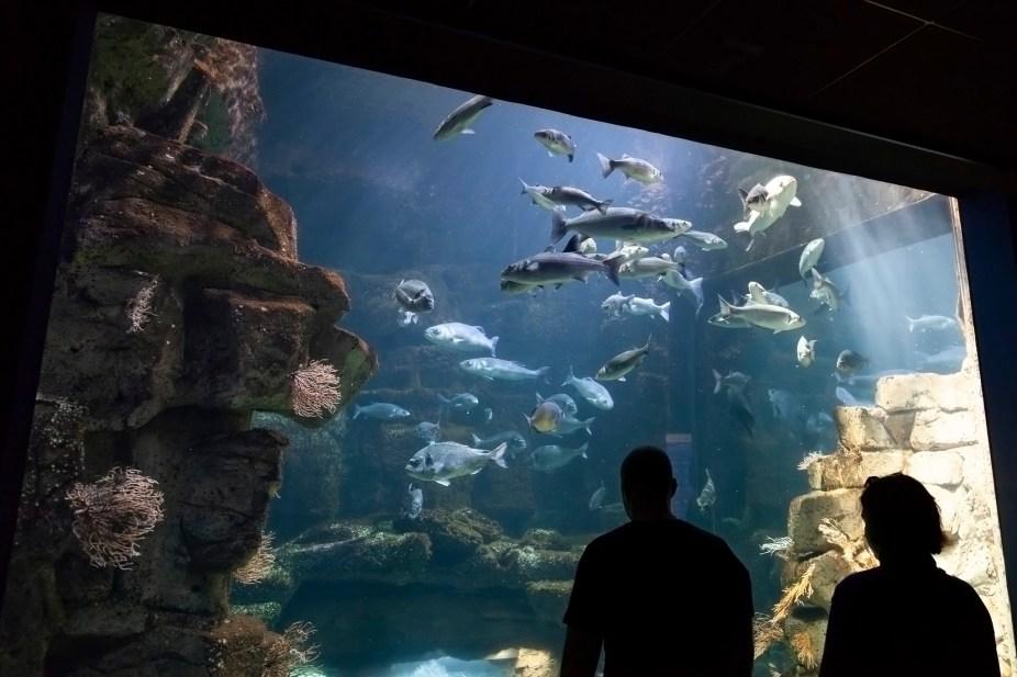 La Rochelle Aquarium