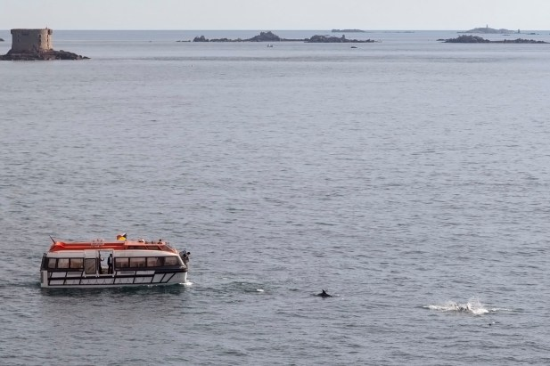 Arcadia Tender Boat, Dolphins, Guernsey